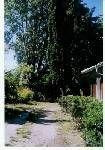 Vue extérieure de la location Location Maison 18048 Gujan Mestras