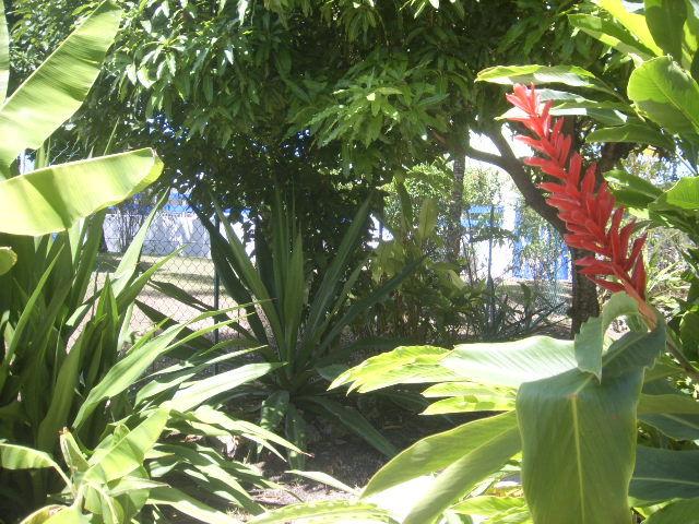 Jardin Location Gite 27568 Sainte Anne (Guadeloupe)