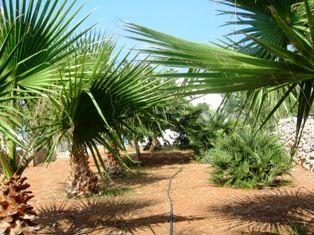 Jardin Location Maison 45348 Pescoluse