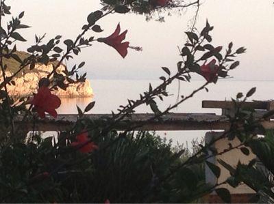 Jardin Location Villa 57483 Alghero