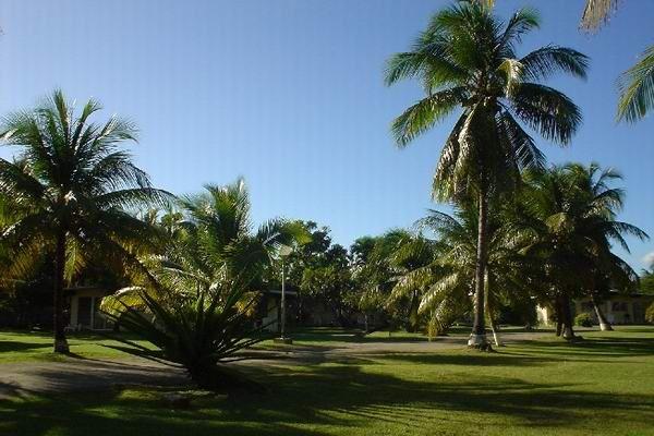 Vue de la terrasse Location Bungalow 8029 Sainte Anne (Guadeloupe)