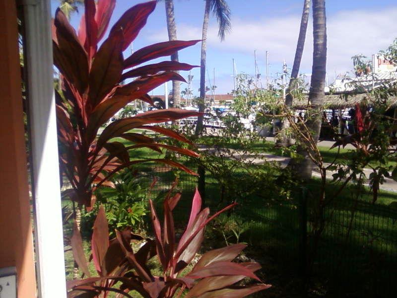 Vue de la terrasse Location Studio 67507 Saint Francois