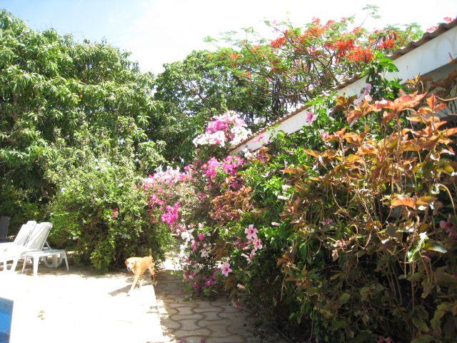 Jardin Location Appartement 99784 La Somone