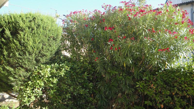 Jardin Location Appartement 112791 Fano