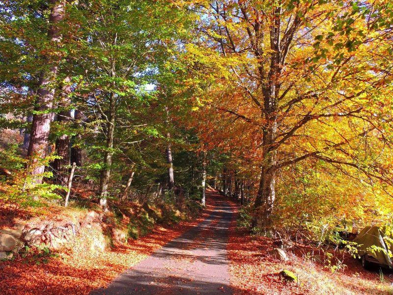 Vue à proximité Location Gite 85778 Saint-Anthème
