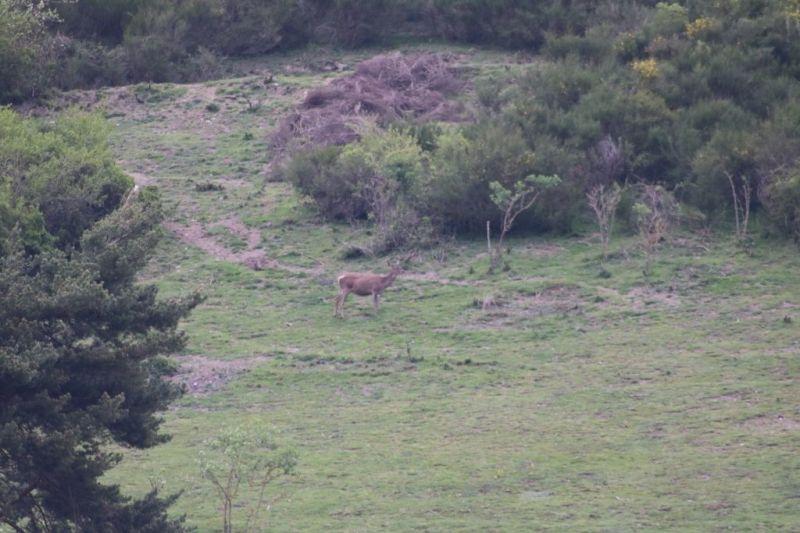 Vue depuis la location Location Maison 95270 Saint Lary Soulan