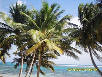 Vue de la terrasse Location Appartement 73786 Sainte Anne (Guadeloupe)