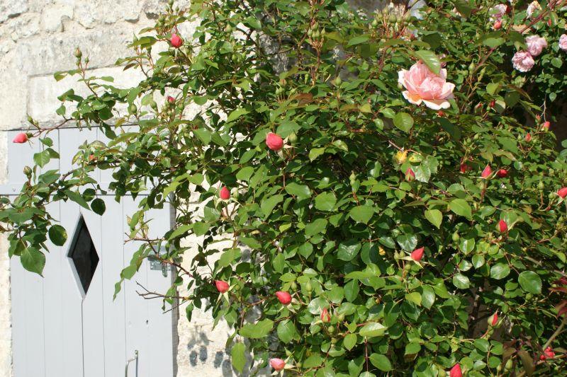Vue extérieure de la location Location Gite 108202 La Rochelle