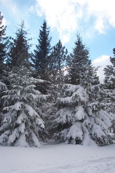 Location Maison 117356 Mont Lozère