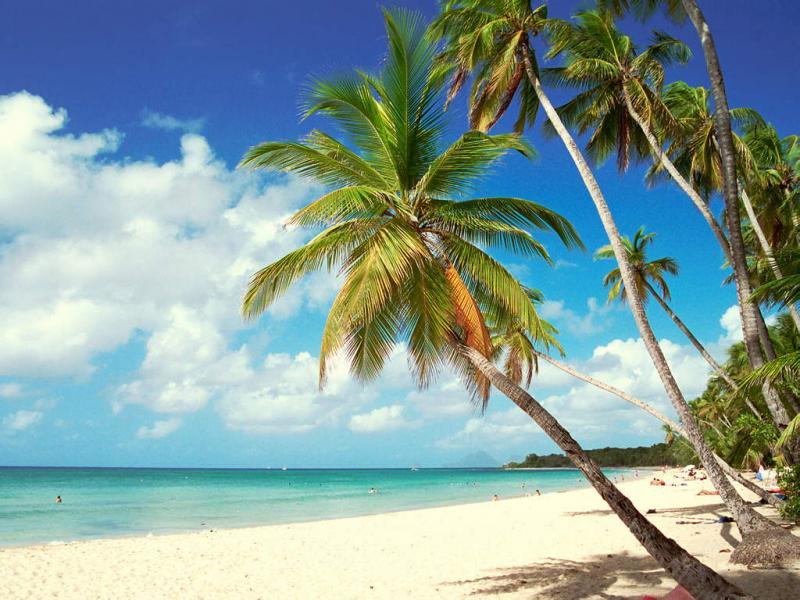 Piscine Location Appartement 67787 Sainte Anne (Martinique)