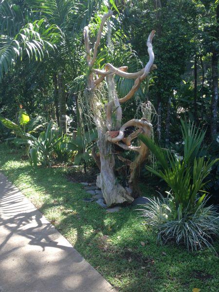 Jardin Location Cabane dans les arbres 83872 Bouillante