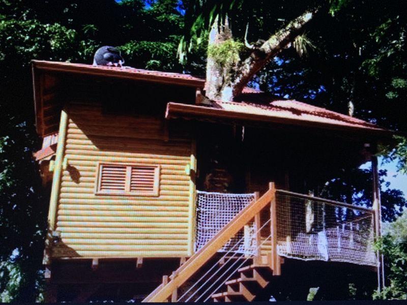 Location Cabane dans les arbres 83872 Bouillante