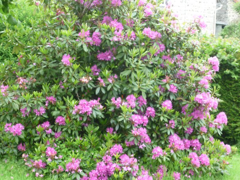 Jardin Location Gite 12258 La Bourboule