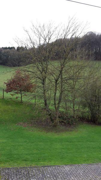 Vue de la terrasse Location Gite 13238