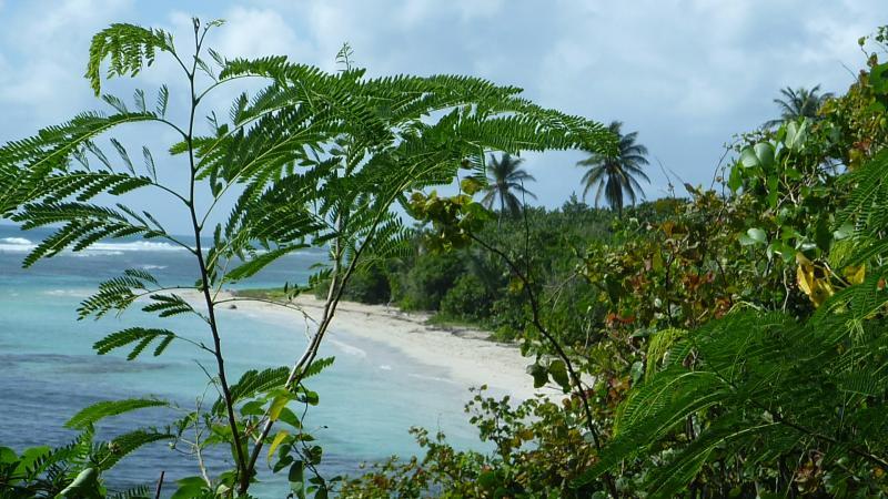 Location Gite 15292 Sainte Anne (Guadeloupe)