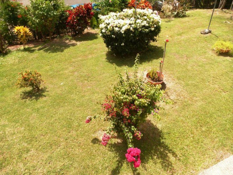 Jardin Location Appartement 25506 Gosier (Guadeloupe)