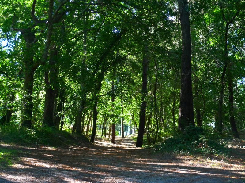 Vue à proximité Location Mobil-home 31432 Biscarrosse