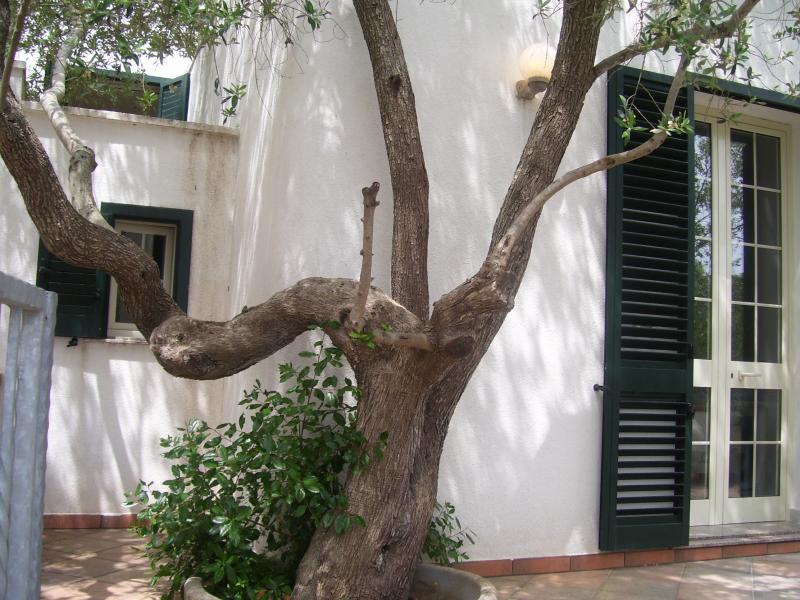 Cour Location Villa 44776 Otranto