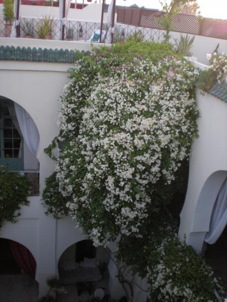 Vue de la terrasse Location Chambre d'hôte 45751 Marrakech
