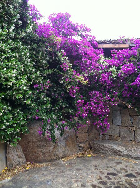 Jardin Location Appartement 52751 La Maddalena