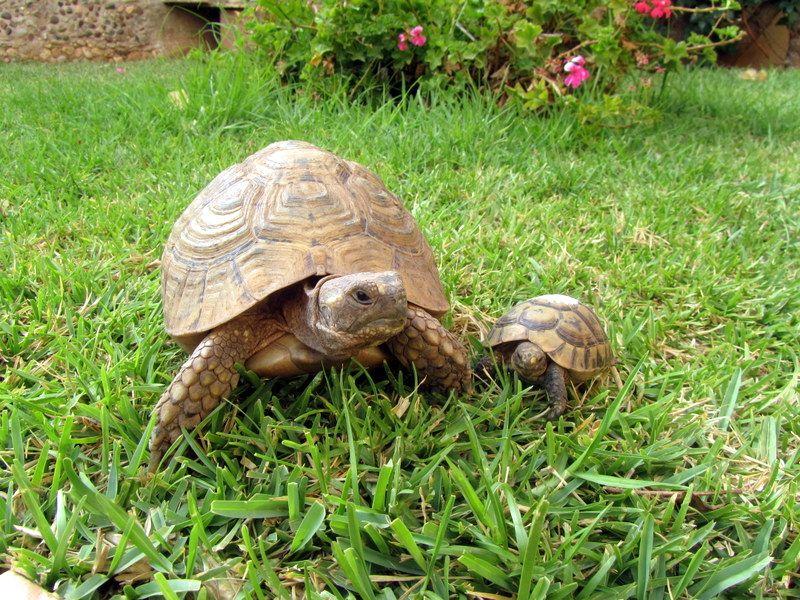 Jardin Location Villa 54307 Agadir