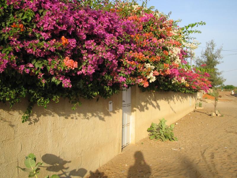 Vue extérieure de la location Location Villa 56518 Saly