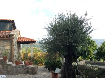 Jardin Location Gite 62019 Arcos de Valdevez