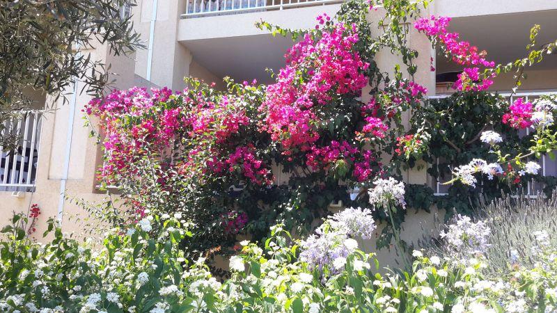 Vue de la terrasse Location Appartement 114366 Ile Rousse