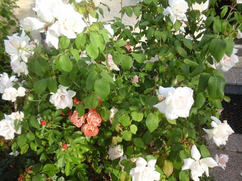 Jardin Location Villa 116109 Balaruc les Bains