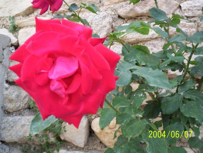 Jardin Location Gite 68513 Montpellier