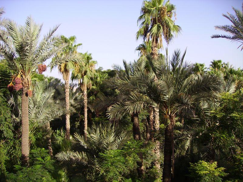 Vue depuis la location Location Appartement 70324 Marrakech