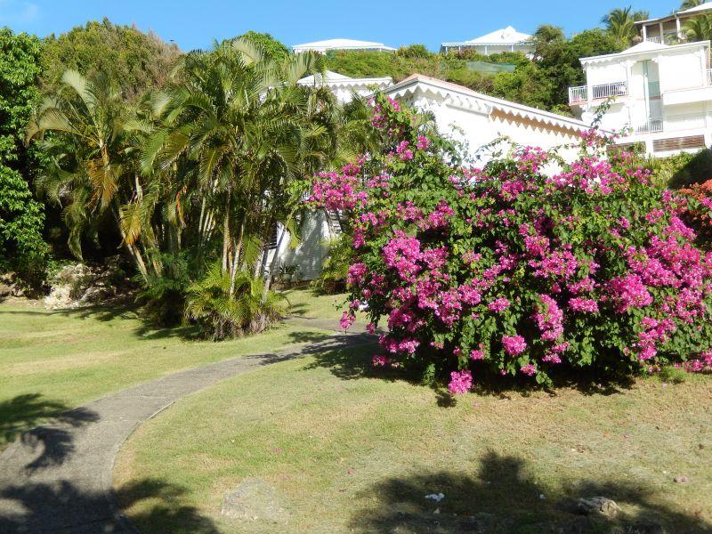 Jardin Location Appartement 90989 Saint Francois