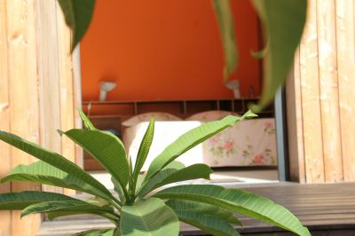 Jardin Location Chambre d'hôte insolite 93210 Gosier (Guadeloupe)