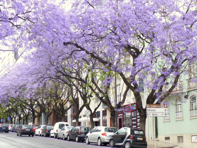 Vue à proximité Location Appartement 106237 Lisbonne