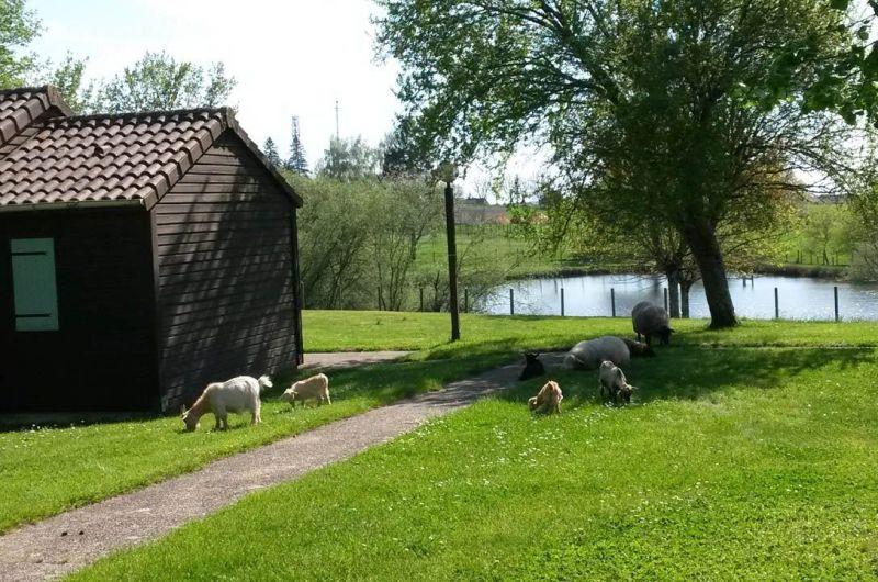 Location Bungalow 119217 Périgueux