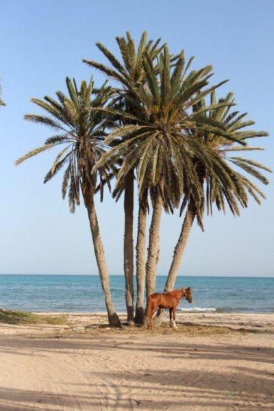 Vue à proximité Location Maison 68407 Djerba