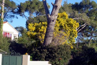 Vue extérieure de la location Location Appartement 82690 La Seyne sur Mer