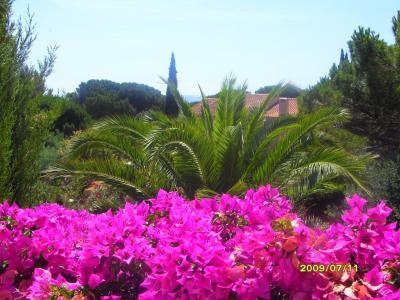 Vue de la terrasse Location Appartement 94225 Saint Tropez