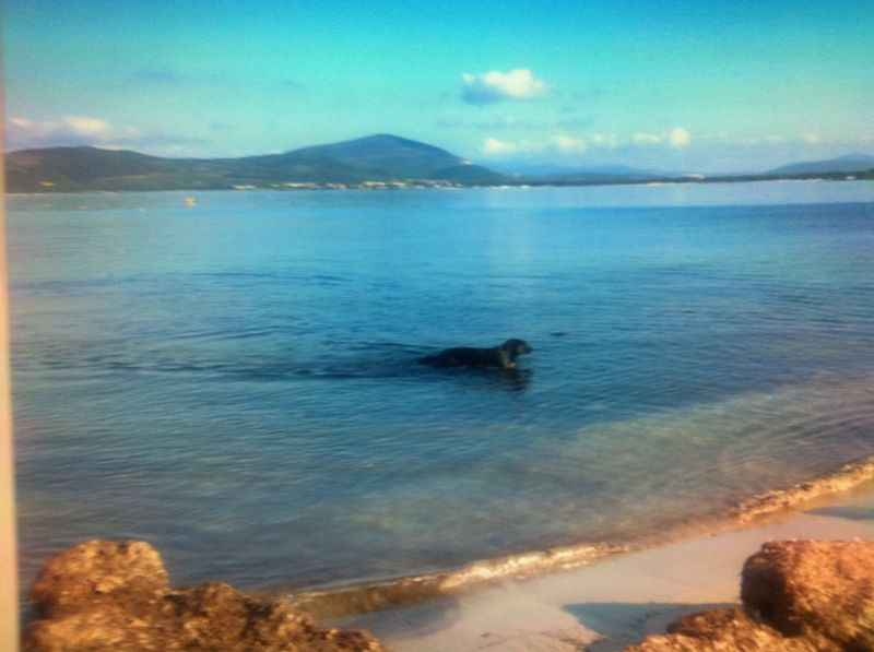 Plage Location Appartement 108789 Alghero