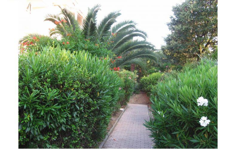 Jardin Location Studio 119293 La Croix Valmer