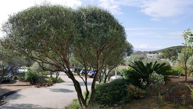 Parking Location Appartement 7881 Porto Pollo