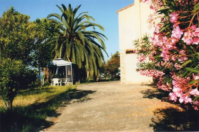Jardin Location Villa 101791 Sagone