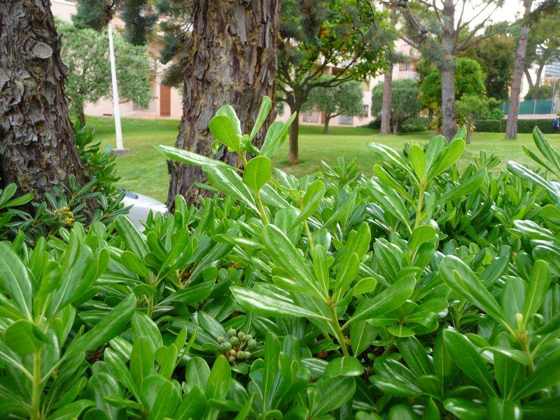 Jardin Location Appartement 110242 Roquebrune Cap Martin