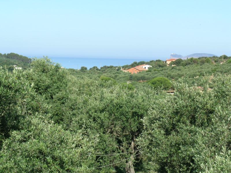 Vue extérieure de la location Location Villa 65699 Alghero