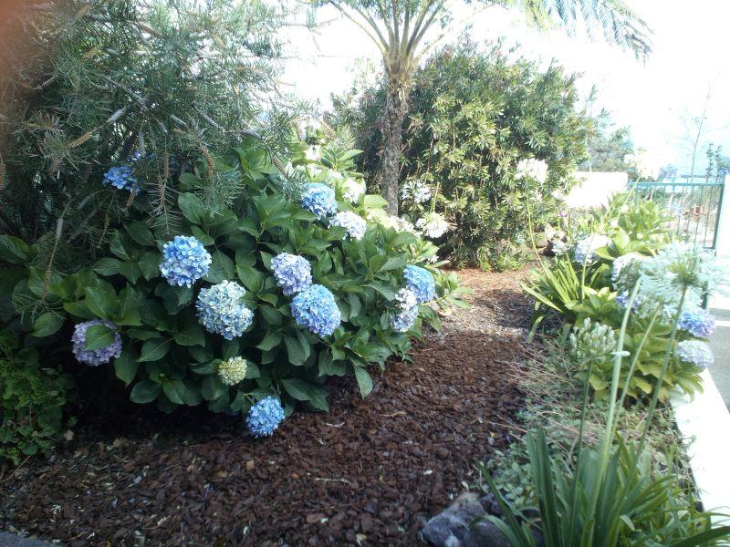 Jardin Location Maison 66093 Santa Cruz