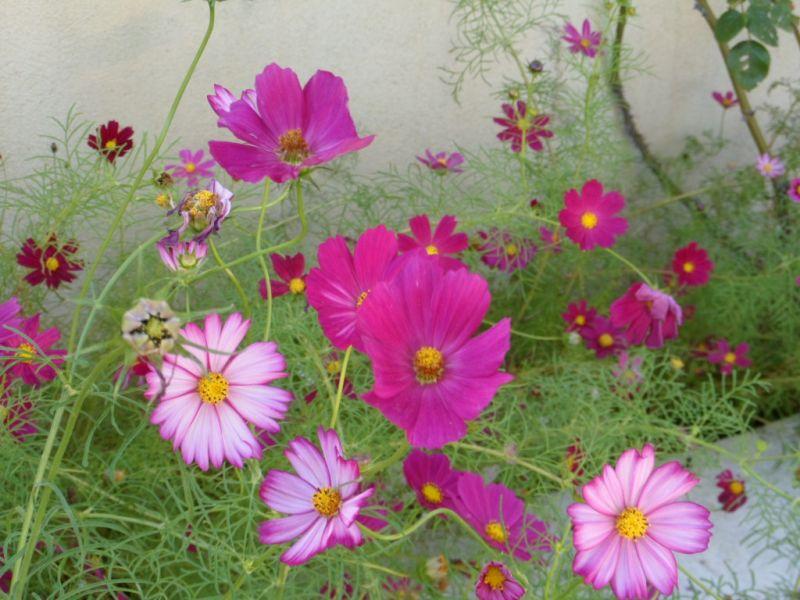 Jardin Location Maison 91300 Aix en Provence