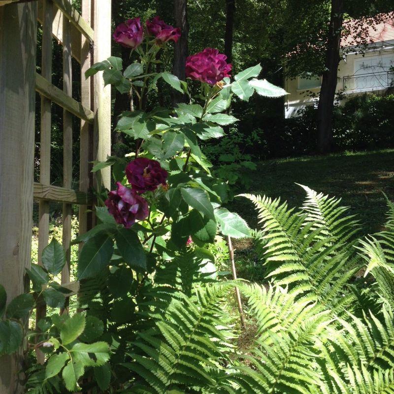 Jardin Location Villa 111500 Saint Valéry sur Somme