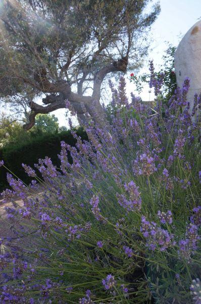 Jardin Location Villa 113140 Saint Raphael