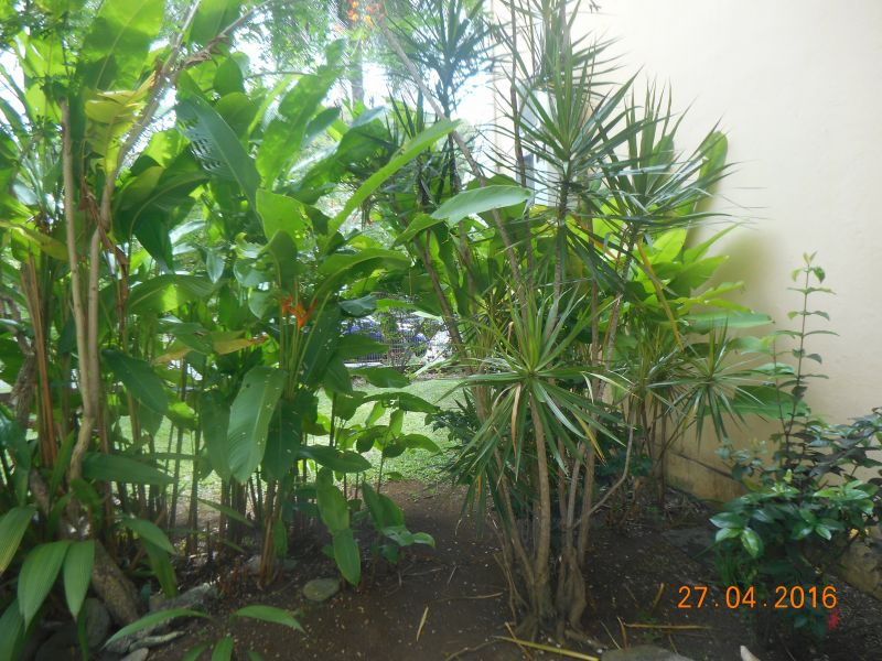 Jardin Location Appartement 86341 Gosier (Guadeloupe)