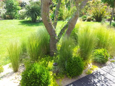 Jardin Location Maison 78310 Hourtin